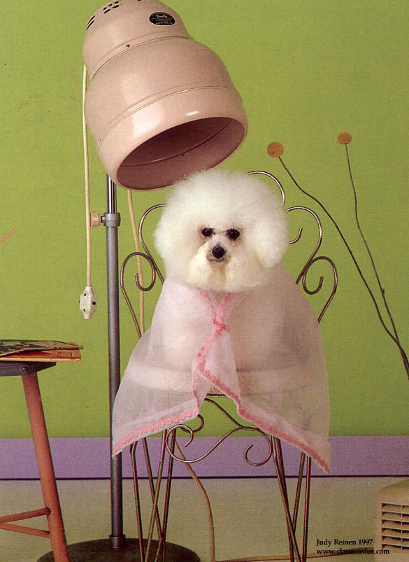 pet groom We treat each animal with care and strive to provide a safe and clean environment for your pet wags and whiskers is a full service dog  we groom all breeds and.